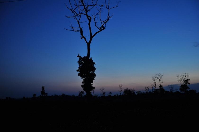 টি-গার্ডেনের কোন গাছের  silhouette
