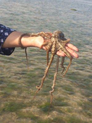 an-octopus