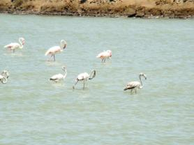 flamingos-at-the-salt